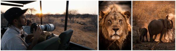 Photo Video Paysage Jcpieri Safari Animaliere
