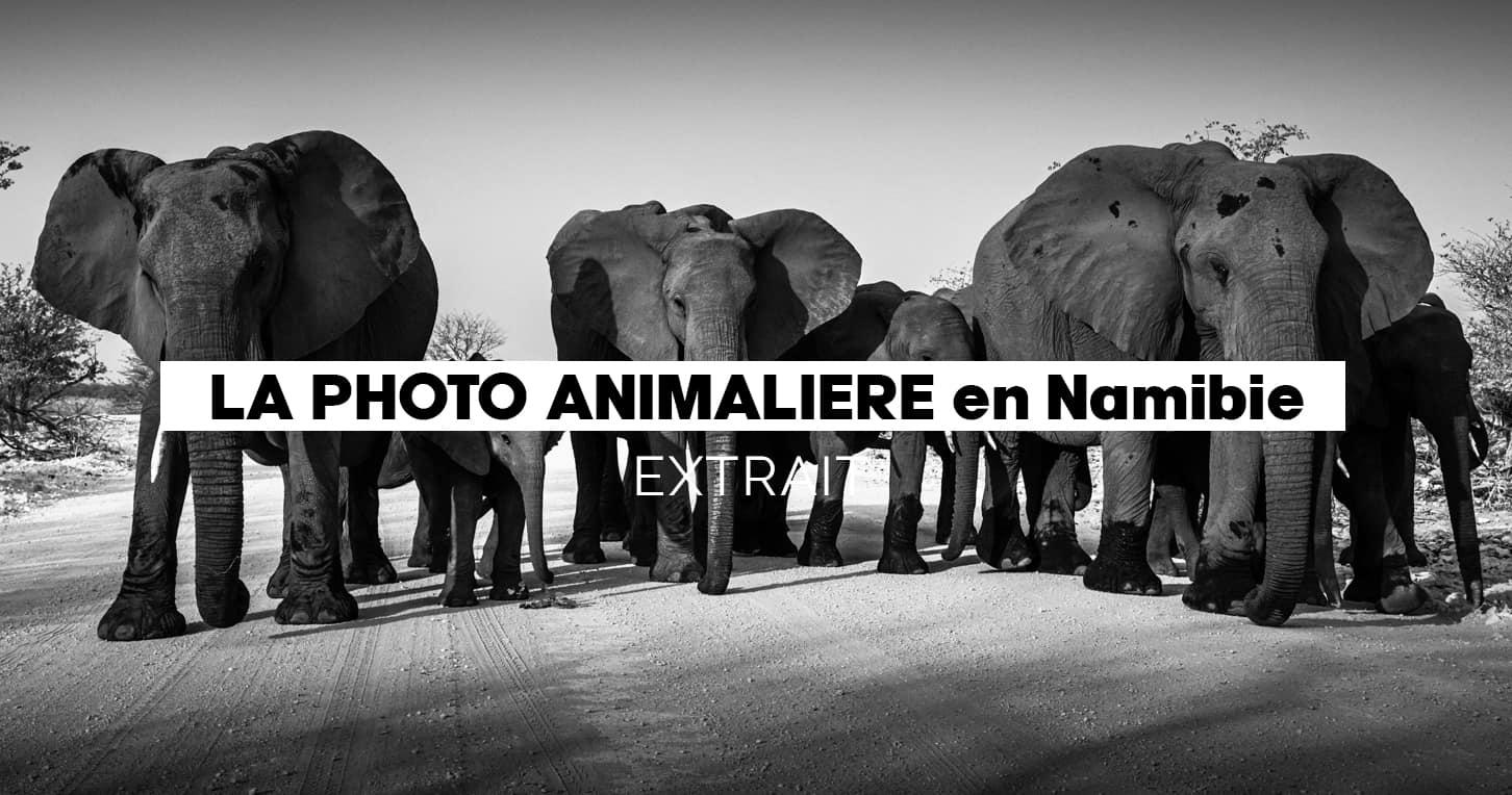 Module Photo & vidéo animalière 2